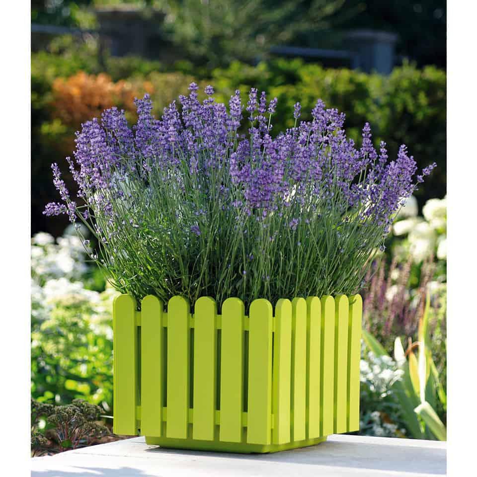 Vivaio roma garden centro per il giardinaggio a roma for Lavanda coltivazione in vaso