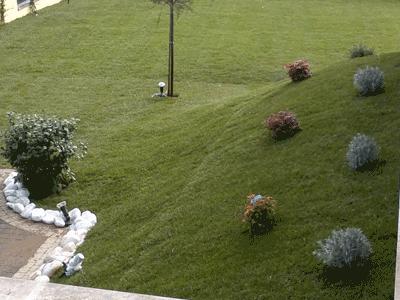 Manutenzione del verde vivaio roma garden centro per for Prato senza manutenzione