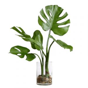 piante da interno - vivaio