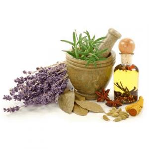 piante da orto aromatiche