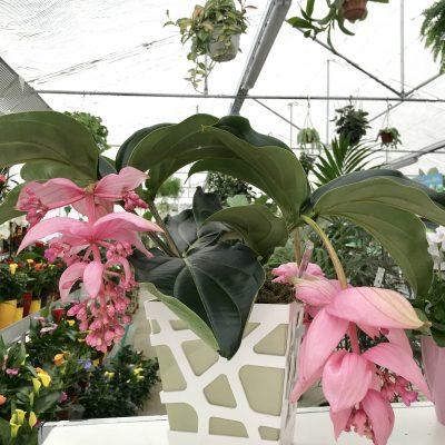 piante_interno_fiorite