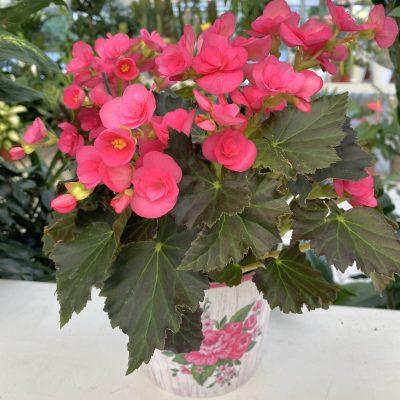 piante_interno_piccole