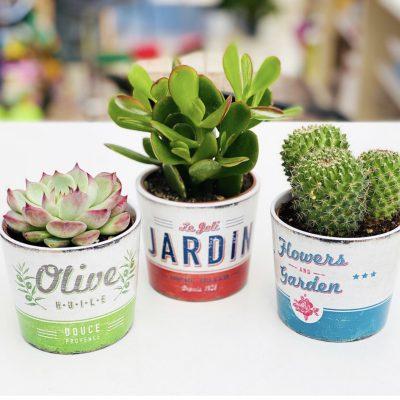 piante_da_interno_grasse