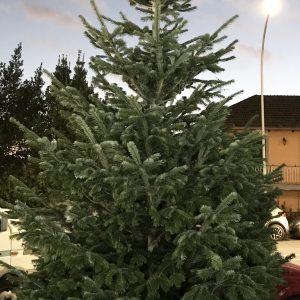 albero natale grande