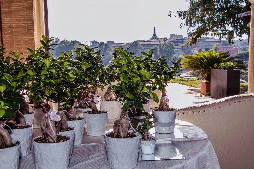 Bonsai per bomboniere Roma