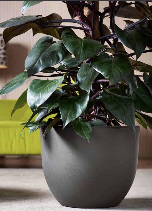 Vaso design eggy