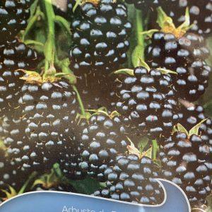 Frutti Minori